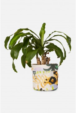 Toucan Tango Medium Planter